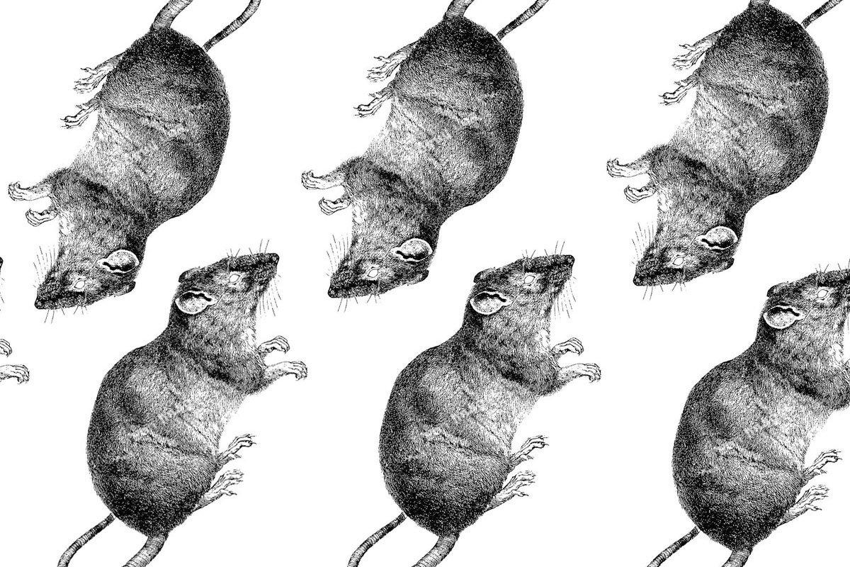 Crónica de la rata que da cuerda al apocalipsis (Primera parte)