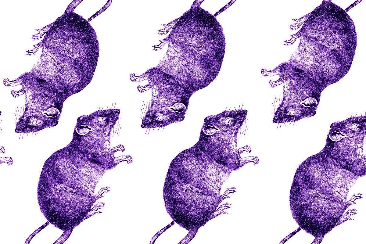 Crónica de la rata que da cuerda al apocalipsis (Quinta parte)